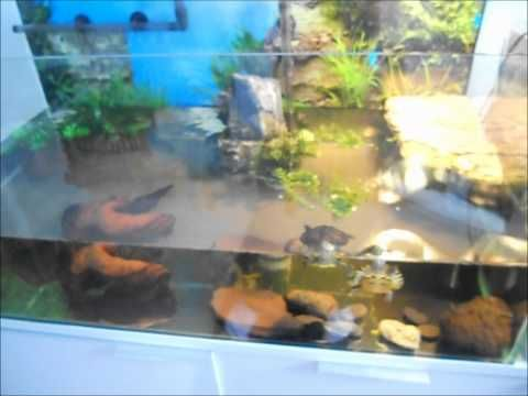 New Turtle Tank - Yellow Bellied Sliders - YouTube