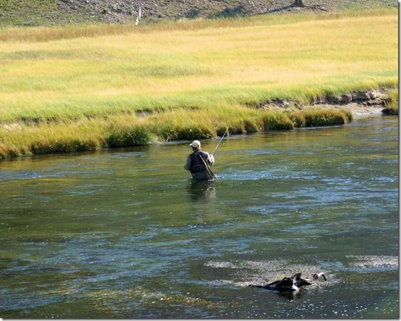 17 best images about fly fishing on pinterest rivers for Yellowstone national park fishing