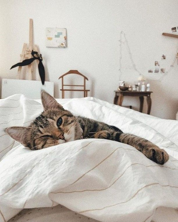 Era Organic Products Are All 100 Cruelty Free Now It S Time To Go Back To Enjoying Your Lazy Sunday In 2020 Cats Pets Animals