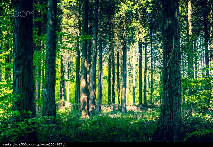 Idyllic forest with a clearing - stock photo