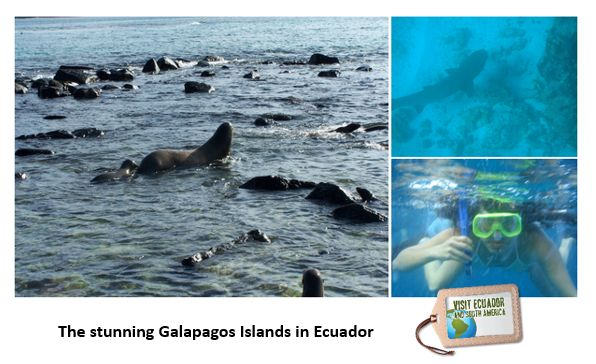Travel low-budget to the Galapagos Islands #VisitSAmerica www.visitecuadorandsouthamerica.com (scheduled via http://www.tailwindapp.com?utm_source=pinterest&utm_medium=twpin&utm_content=post86634165&utm_campaign=scheduler_attribution)