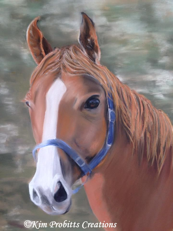 Really enjoyed doing this horse portrait. Seems that larger animals were the favoured animals this week.