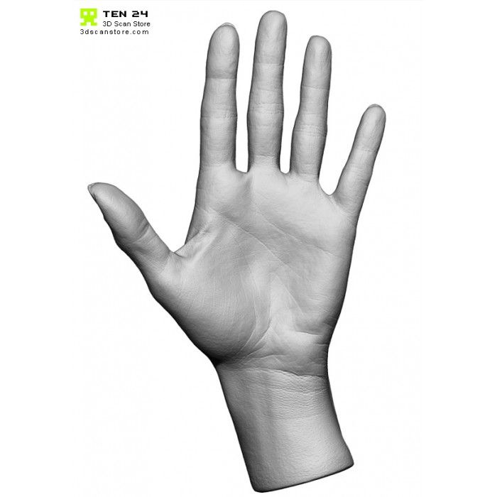 Female Hand 01 Fingers Straight  #anatomy #female #hand #nimeshbaidhya