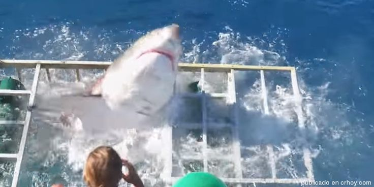(Video) Buzo sobrevive al ataque de gigantesco tiburón blanco