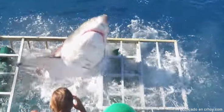 (Video) Buzo sobrevive al ataque de gigantesco tiburón blanco