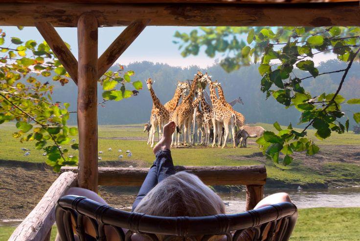 safari-resort-beekse-bergen-uitzicht-savannes.jpg