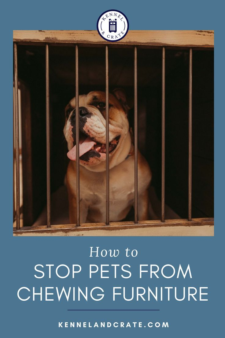 How To Stop Pets Chewing Furniture Dog Behavior Pets Dog Furniture