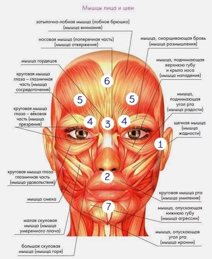 объявления мышцы лица фото картинки новорожденного