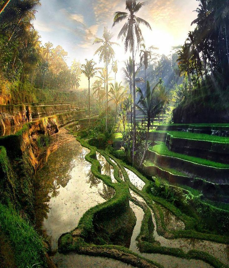 Bali. I think this will be our next trip.
