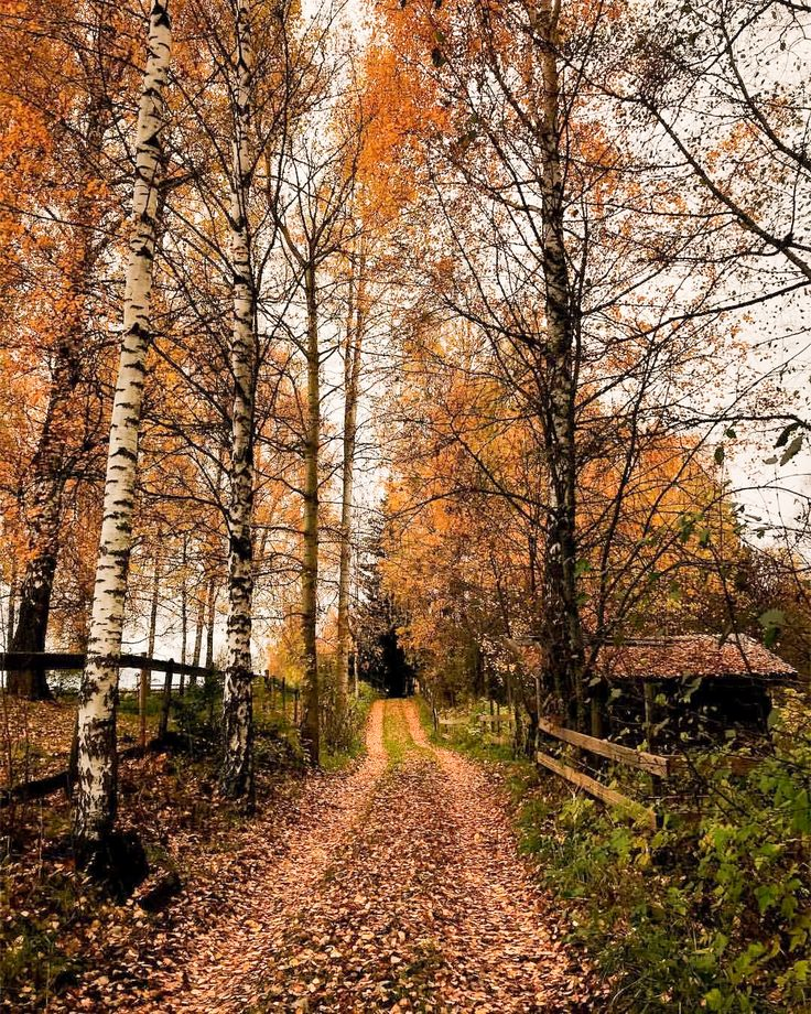 Leaf covered path in the country (Norway) by Hailey DeRoo Haugen (@mynorthernstory) on Instagram cr.nw.