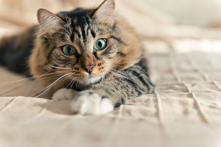 Cat food recall issued for several brands including 9lives