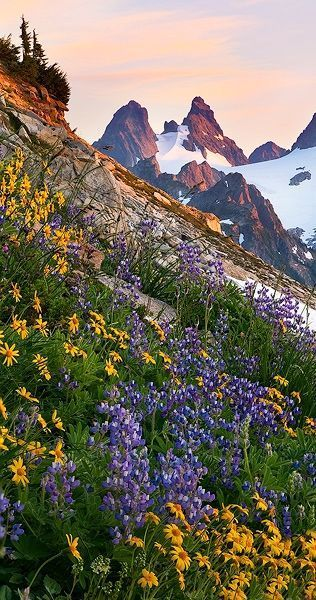 Alpine Flowers in Hunza, Pakistan. The Hunza is a mountainous valley in the Gilgit–Baltistan region of Pakistan. (V)