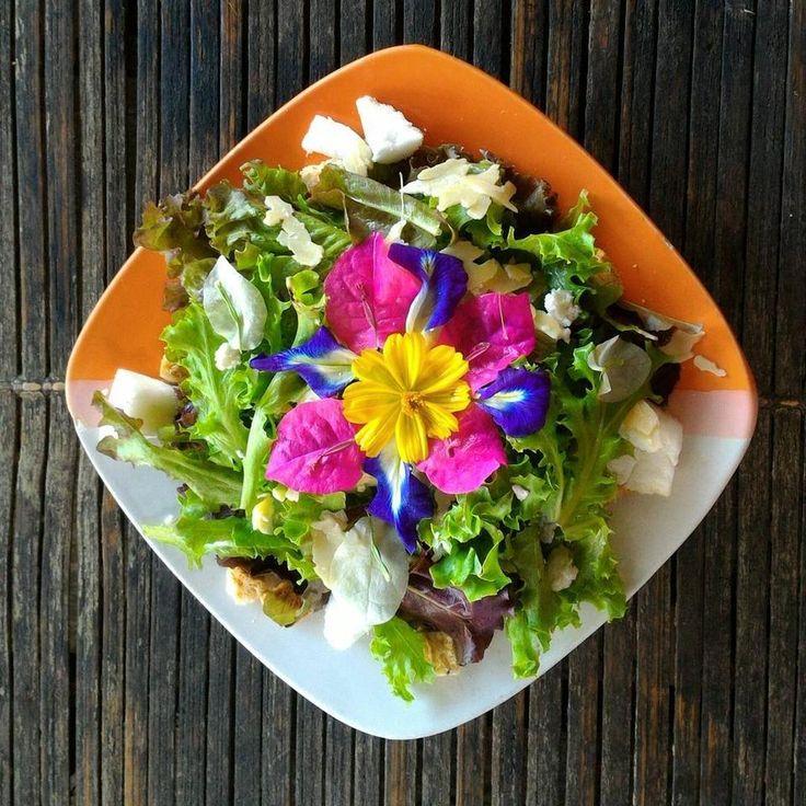Собираетесь посетить Филиппины? Не упустите возможность побывать в Bohol Bee Farm! Основной концепт фермы - это экологичность, натуральность и полезность. При ферме работает резорт с изысканными номерами аутентичного дизайна и ресторан с потрясающим видом на океан.  Всю еду, которую подают на стол - овощи, зелень и даже съедобные цветы - выращивают тут же! Студенты Genius English Academy могут попробовать фирменную кухню и знаменитую острую медовую пиццу с сыром моцарелла в Себу Buzzz Cafe!