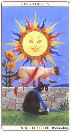 The Sun - Marseille Cat Tarot - Rozamira Tarot - Picasa Web Albums
