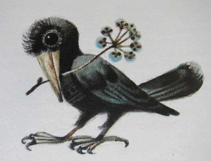 Crow with a sprig. Vintage illustration by Czech illustrator Karel Franta. Animal fairy stories.