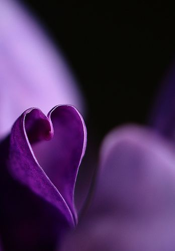 Natural purple heart to show our love for Grasse