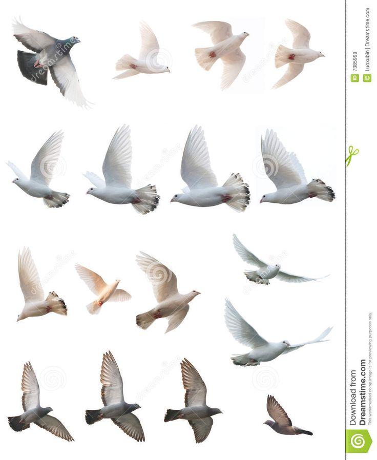 Peace Pigeons Flying Peace pigeons