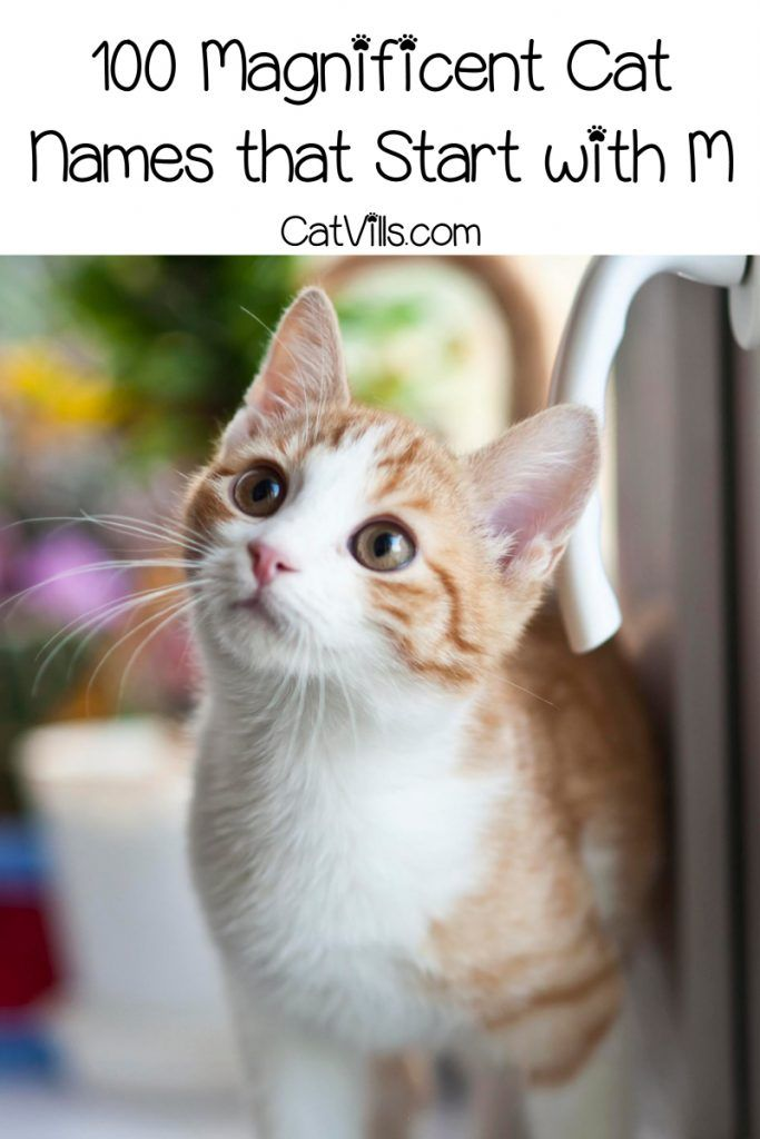 100 Magnificent Cat Names That Start With M Catvills Cat Names Girl Cat Names Kitten Names