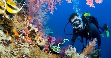 Explore recifes de coral com o Google Street View | Ciência Online - Saúde, Tecnologia, Ciência