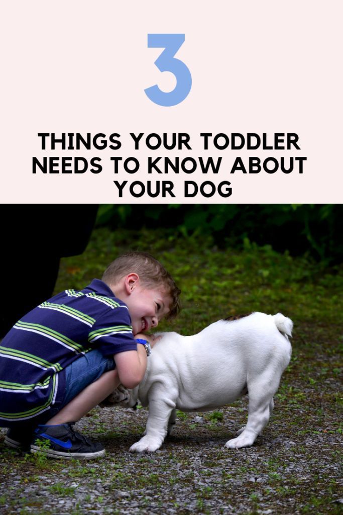 10 Pro Tips For Dog Training By Experts Puppy Training Schedule