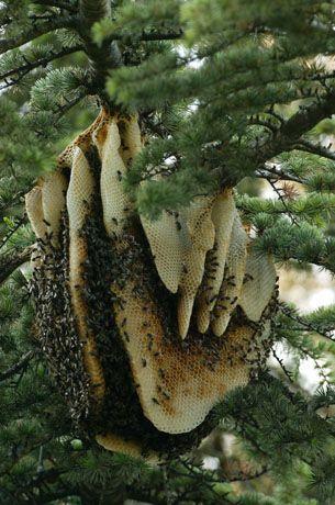 L'Atelier d'Anduze: abeilles sauvages © Éric Tourneret