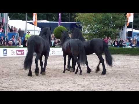 Nagenieten van Horse Event 2013 met de show van paardenman Frédéric Pignon!
