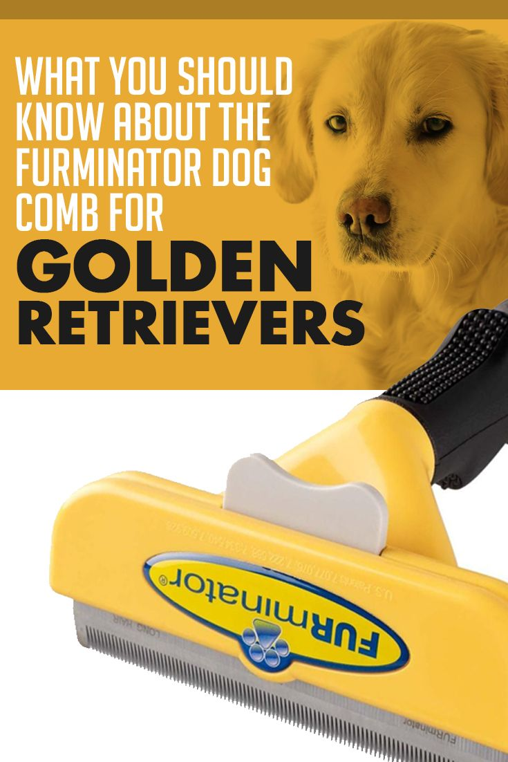 What You Should Know Before Using The Furminator On Your Golden Retriever Furminator Dogs Golden Retriever Golden Retriever Grooming