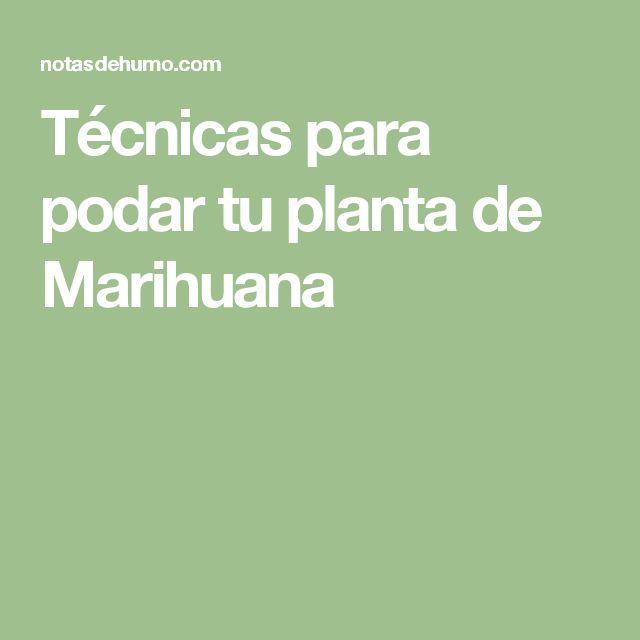 Técnicas para podar tu planta de Marihuana