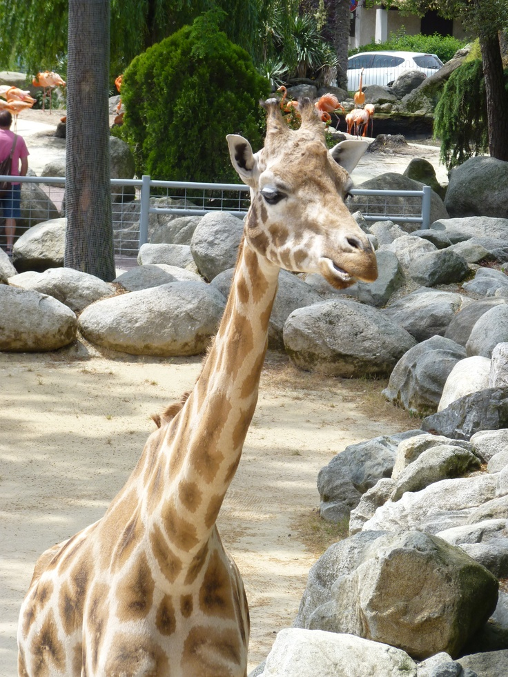 Zoo de La Palmyre my France Pinterest Giraffe and France - camping ile oleron avec piscine couverte