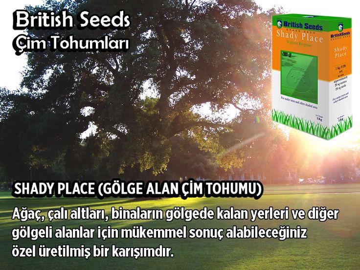 🍀SHADY PLACE (GÖLGE ALAN ÇİM TOHUMU) Ağaç, çalı altları, binaların gölgede kalan yerleri ve diğer gölgeli alanlar için mükemmel sonuç alabileceğiniz özel üretilmiş bir karışımdır. Sonbahardan ilkbahara kadar yetersiz güneşlenme nedeniyle sorunlar yaşanan gölge yerler, çevre şartlarına hassas ve bakımı zor alanlar içindir. Sipariş: 💻https://www.tohumgubre.com ☎0212 438 38 68 ✉bilgi@tohumgubre.com #çim #çimtohumu #çimen #tohum #ağaç #çevre #tarım #ziraat #peyzaj