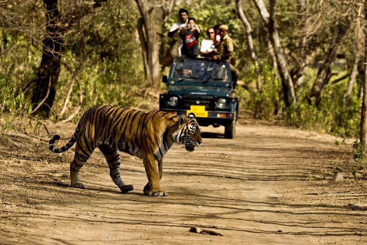 Uttarakhand, Corbett Wild Life sanctuary