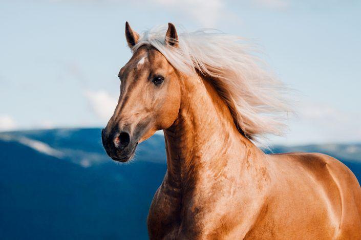 Fotos Pferde In Der Natur I Pferde Pferde Fotografie Schone Pferde