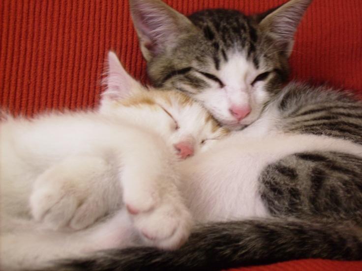 Lindos gatitos adorables