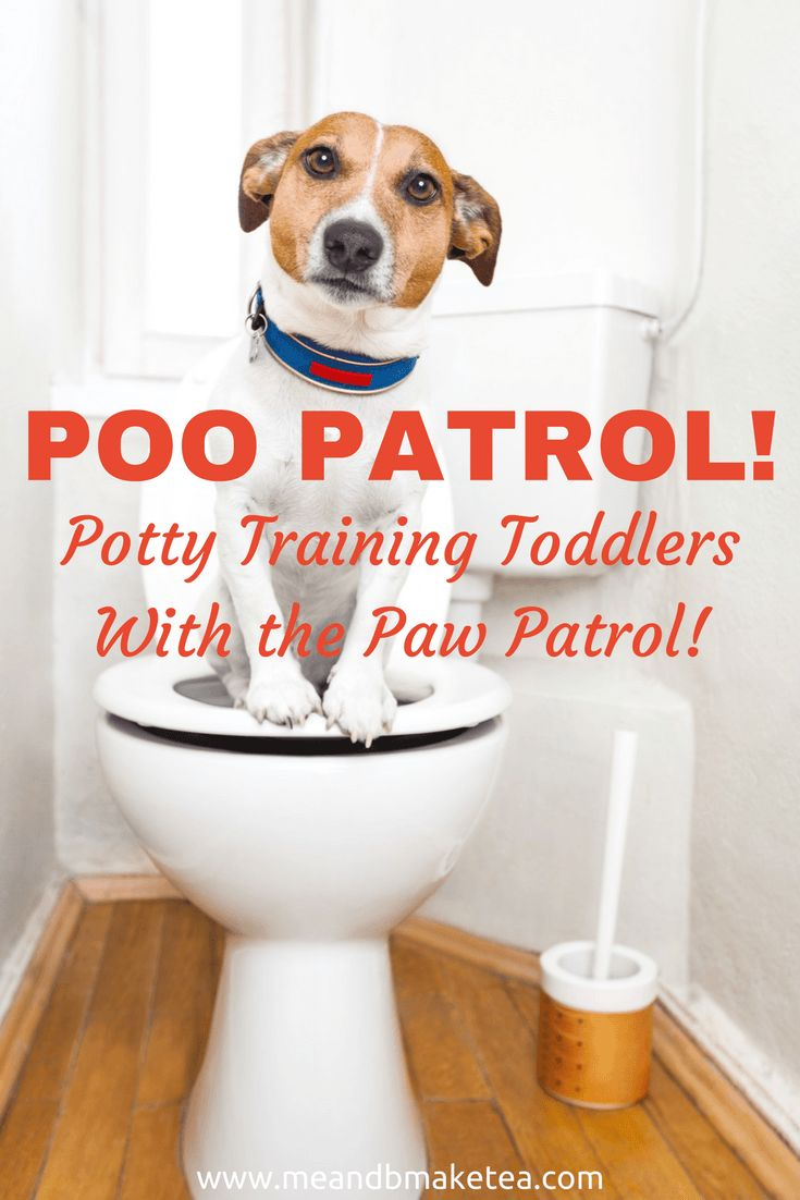 "Have you had it with potty training your little one? Fed up of wiping bums and cleaning up poop?! Here is my ""at the end of my tether"" take on Paw Patrol - no pup pup boogie here! And no tips or tricks on how to potty train toddlers.  Just good old fashioned laughing! and crying."
