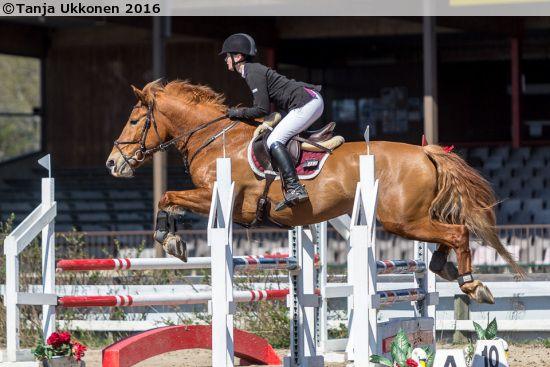 Finnhorse mare Ekin Riina in show jumping competition