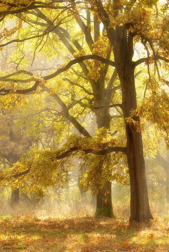 Fotografia lesa prežiareného slnkom v jesenných zlatistých farbách.