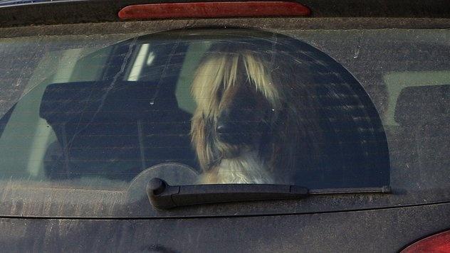 #Hund verstarb im geparkten, verschlossenen Auto - waehrend der Welt-Hunde-Ausstellung