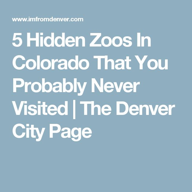 5 Hidden Zoos In Colorado That You Probably Never Visited | The Denver City Page