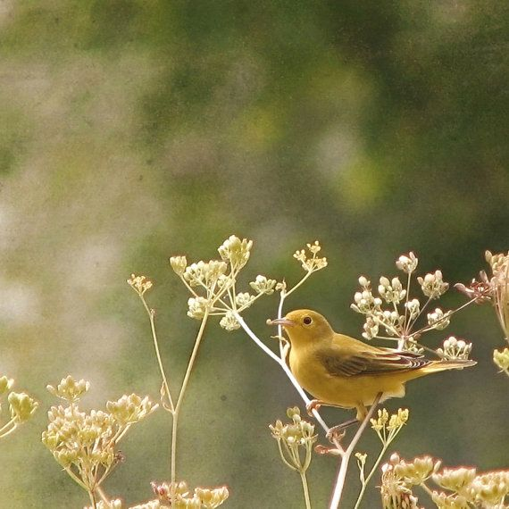 Yellow and Emerald Autumn nature photography  bird  by Raceytay, $30.00 - シェムハザ