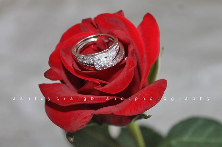 Ring in rose