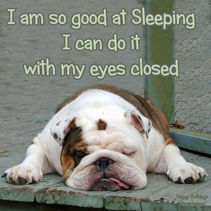 Bulldog Quote  – BaggyBulldogs