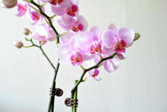 Ber ideen zu lila orchideen auf pinterest - Wandfarbe orchidee ...