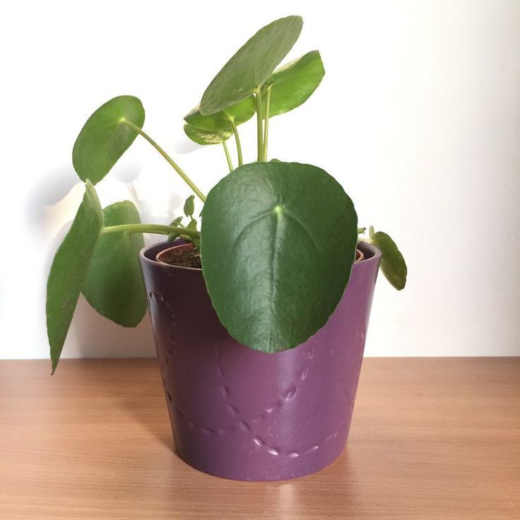 1000 ideas about plante verte on pinterest plants for Plante verte