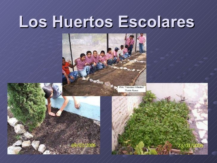 Huerto Escolar Plasko Interactive Yahoo Image Search Results