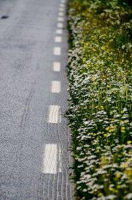 Noorse flora met levendige kleurtjes  Noorwegen is een land vol extremen. Van zon naar regen in luttele minuten, hoge bergen, groene tinten die je nog nooit hebt gezien en bloemen in bijna alle kleuren van de regenboog.