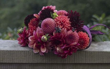 The modern dahlia: beautiful in every colour - Telegraph