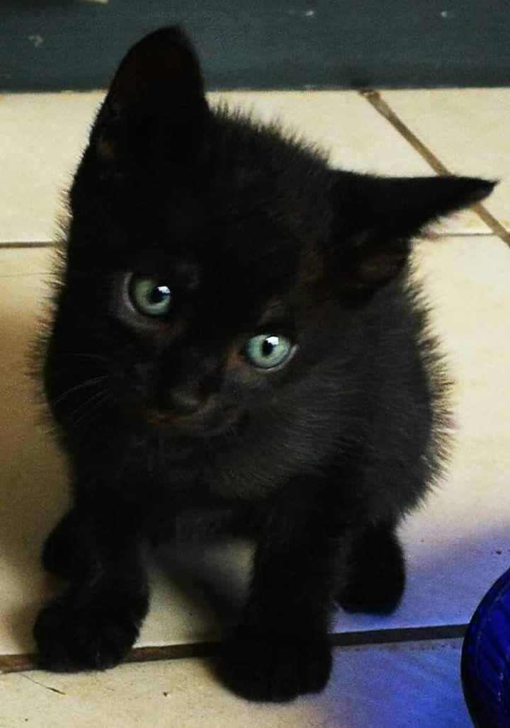 Pinterest Hellxamanda Cats And Kittens Kittens
