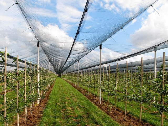 Green housePhotos, Green Houses, Agriculture Protective, Plastic Products, Nets Products, Products Suppliers
