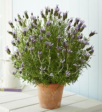 9 best plants that are not toxic to cats images on pinterest indoor house plants container. Black Bedroom Furniture Sets. Home Design Ideas