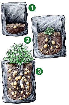 Záhrada a príroda - Pestovanie - Pestovanie bez záhrady? Áno – vo vreciach